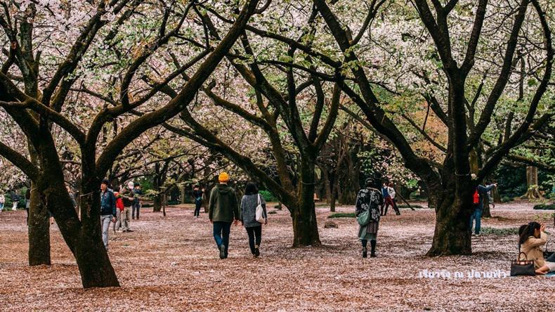 เที่ยว 'ญี่ปุ่น-เกาหลีใต้' อย่างไรไม่ให้เงิบ!