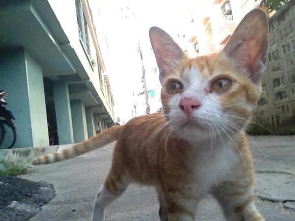 รวมหมาแมวสุดน่ารักประจำตึกเรียนรั้ว สจล.
