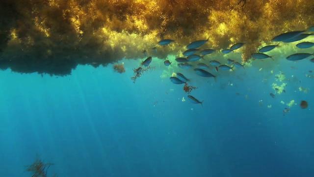 """""""สะดือทะเล"""" ความสวยงามสุดพิศวงแห่งท้องทะเล"""