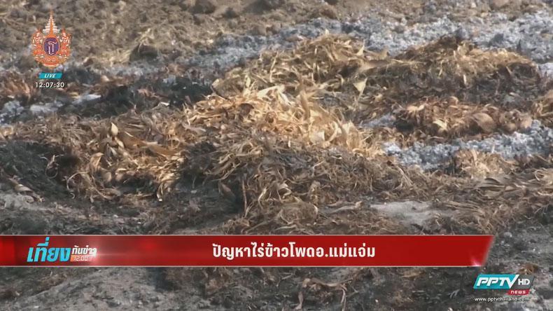 ซีพีโต้ไม่ได้สั่งเผาไร่ข้าวโพด ชี้หมอกควันวิกฤติเหตุชาวบ้านเผาหาของป่ากว่า 59%