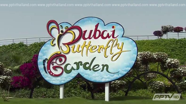 """ดูไบเปิดตัวอลังการ """"สวนผีเสื้อ"""" ในร่มที่ใหญ่ที่สุดในโลก"""