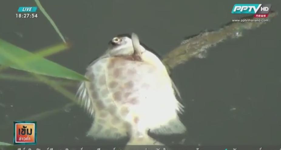 พบปลาตายเกลื่อน คาด สารเคมี วอนหน่วยงานเร่งตรวจสอบ