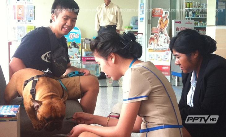 สัตวแพทย์ ชี้ให้สุนัข กินช็อกโกแลต-แอลกอฮอล์ เสี่ยงช็อก-หัวใจวายตาย