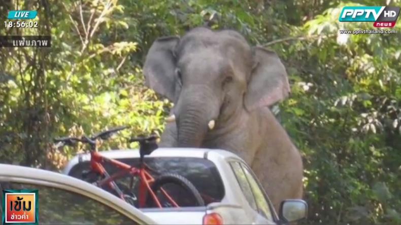 """เตือน! ประชาชนขับรถระวังอันตราย """"ช้างป่า"""" เขาใหญ่"""