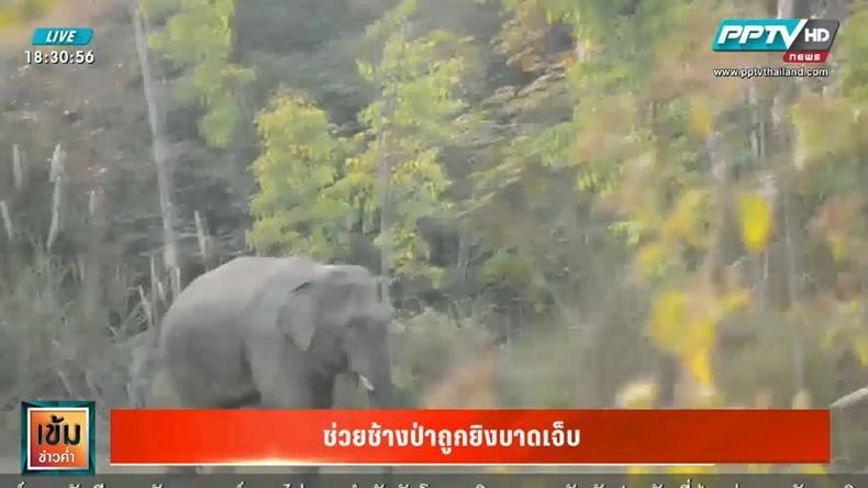 วางแผนช่วยช้างป่าถูกยิงบาดเจ็บ