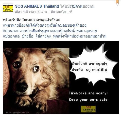 คนรักสัตว์ แห่โพสต์เตือน ระวังเสียงพลุทำสัตว์เลี้ยง หนีออกจากบ้าน !!!