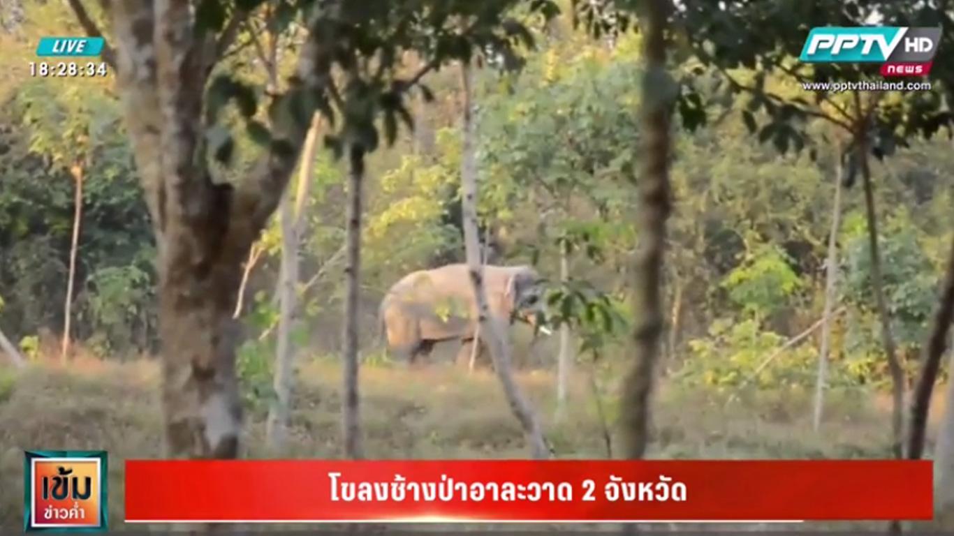 โขลงช้างป่าอาละวาด จนท.เตือนห้ามบีบแตรไล่