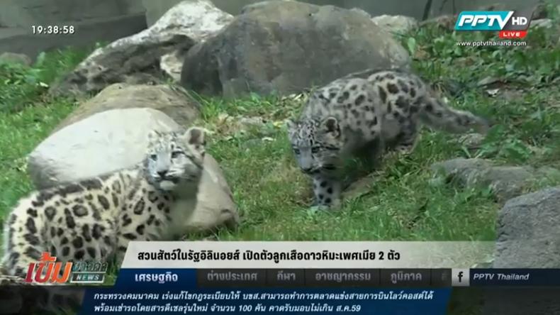 สวนสัตว์ในรัฐอิลินอยส์ เปิดตัวลูกเสือดาวหิมะเพศเมีย 2 ตัว
