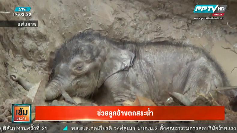 ลูกช้างที่พลัดตกสระน้ำของชาวบ้านล้มแล้ว