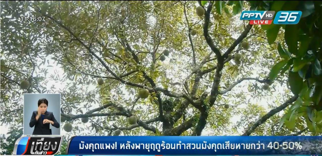 มังคุดแพง! หลังพายุฤดูร้อนทำสวนมังคุดเสียหายกว่า 40-50%