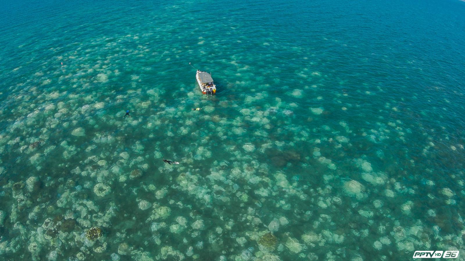 ปรากฎการณ์ปะการังฟอกขาว