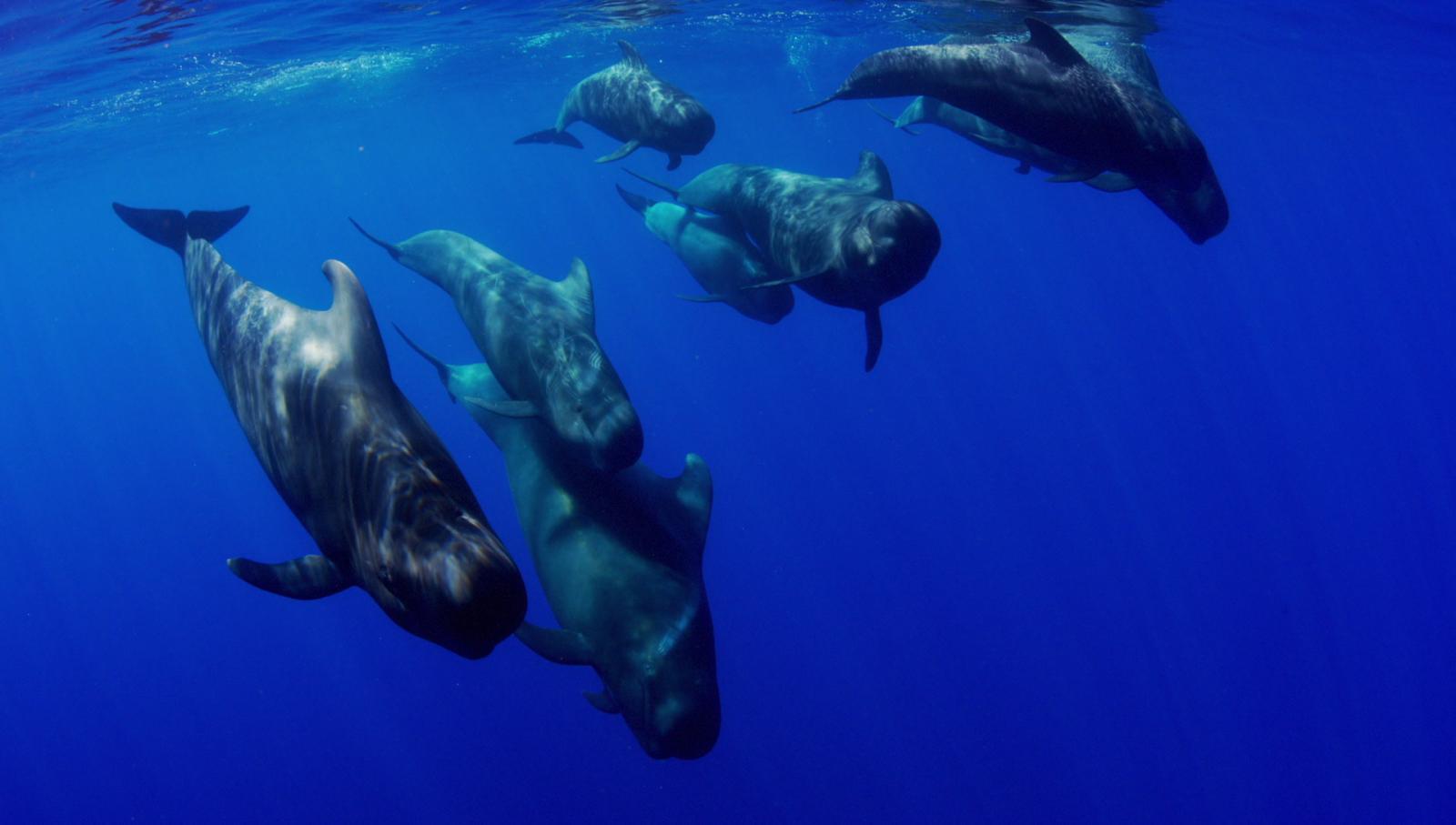 ชีวิตใต้สมุทร....Life in the blue