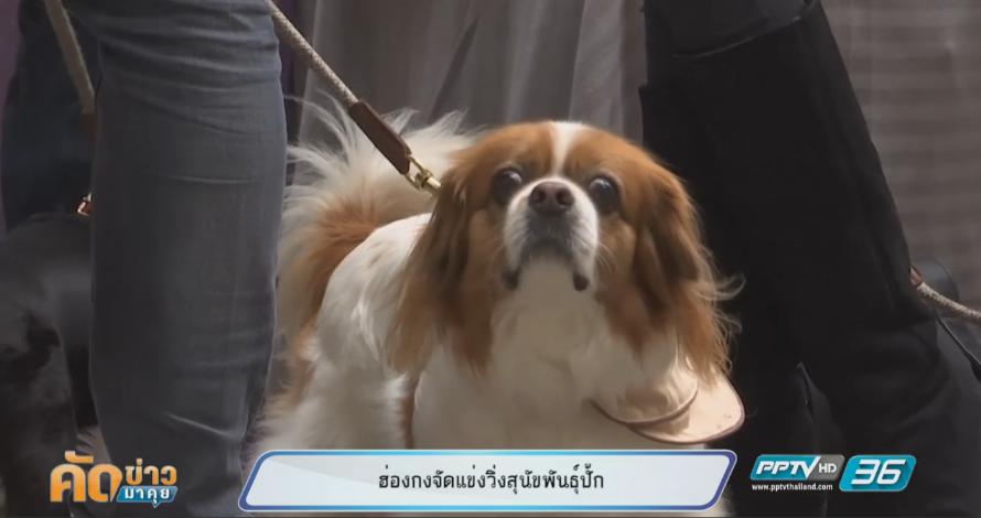 น่ารักสุดๆ! ฮ่องกงจัดแข่งวิ่งสุนัขพันธุ์ปั๊ก