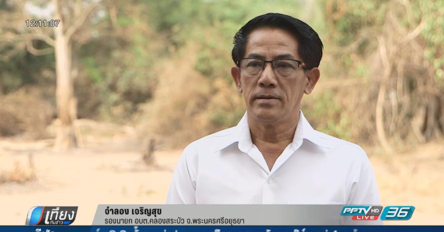 เตรียมจับหมูป่าแจกประชาชน หลังบุกชุมชนกว่า 600 ตัว