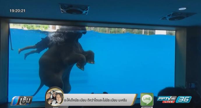 ชมลีลาช้างว่ายน้ำ ดึงดูดความสนใจนักท่องเที่ยว