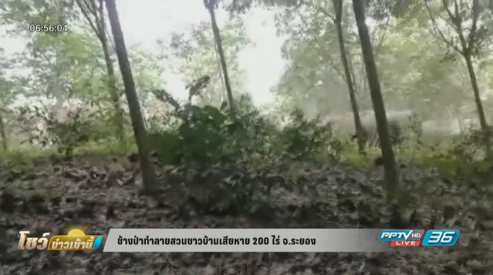 ช้างป่าทำลายสวนชาวบ้านเสียหาย 200 ไร่
