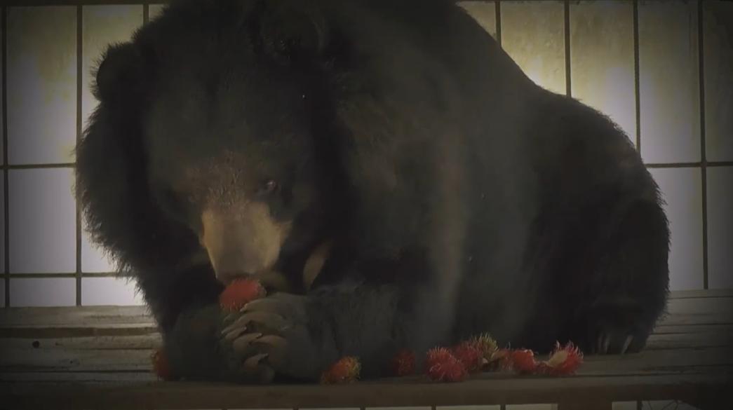 สัตวแพทย์ ชี้เจอหมีในไทยแกล้งตายไม่ได้ผล ต้องหนีหรือสู้เท่านั้น