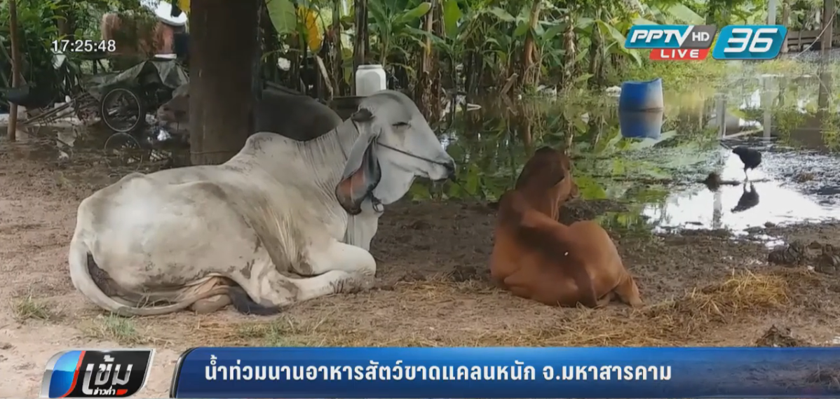 """""""ด็อมเร็ย"""" เข้ากัมพูชา อ่อนกำลังเป็นพายุโซนร้อน ลุ้นสลายตัวก่อนกระทบไทย"""