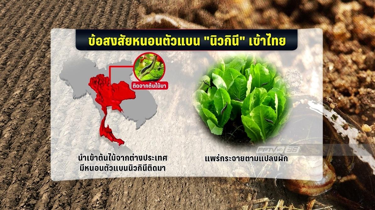 """ระวัง! """"หนอนตัวแบนนิวกินี"""" ก่อโรคในคนได้ แต่ยังไม่พบผู้ป่วยในไทย"""
