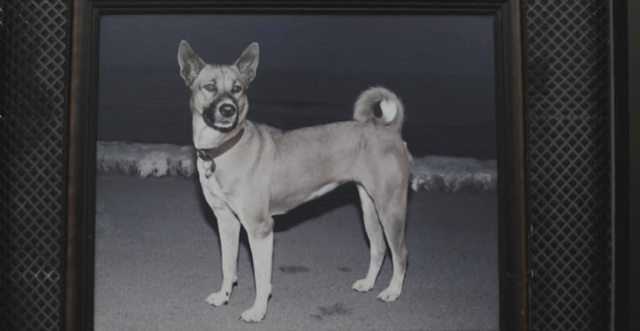 จากคุณทองแดง สู่รพ.สัตว์สุวรรณชาด ช่วยเหลือสุนัขจร (คลิป)