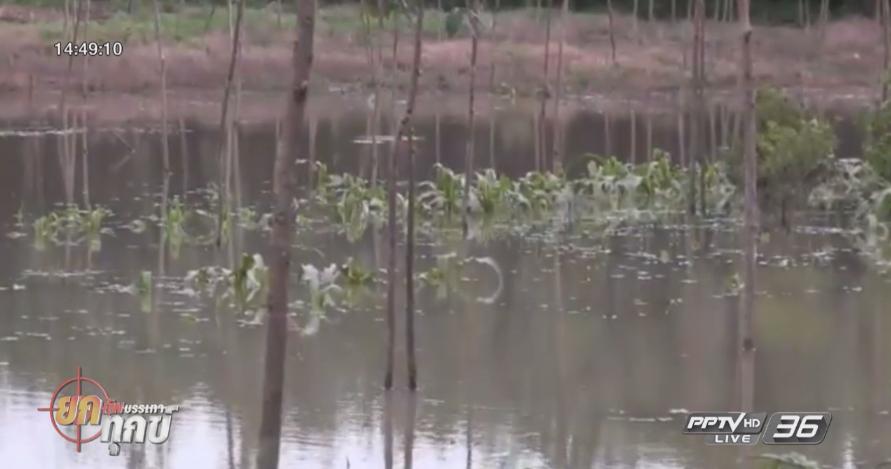 กระบี่เตรียมฟื้นฟูพื้นที่เกษตรหลังน้ำลด