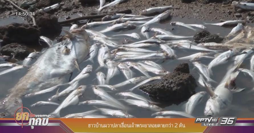 ชาวบ้านผวาปลาเขื่อนเจ้าพระยาลอยตายกว่า 2 ตัน