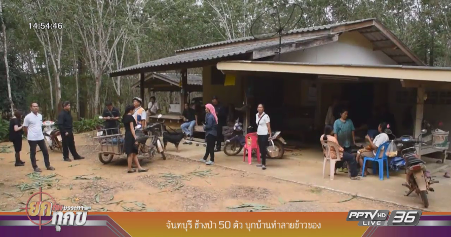 ช้างป่า 50 ตัว บุกบ้านทำลายข้าวของ จ.จันทบุรี