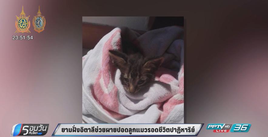 ยามชายฝั่งอิตาลีช่วยผายปอดลูกแมวรอดชีวิตปาฏิหาริย์ (คลิป)