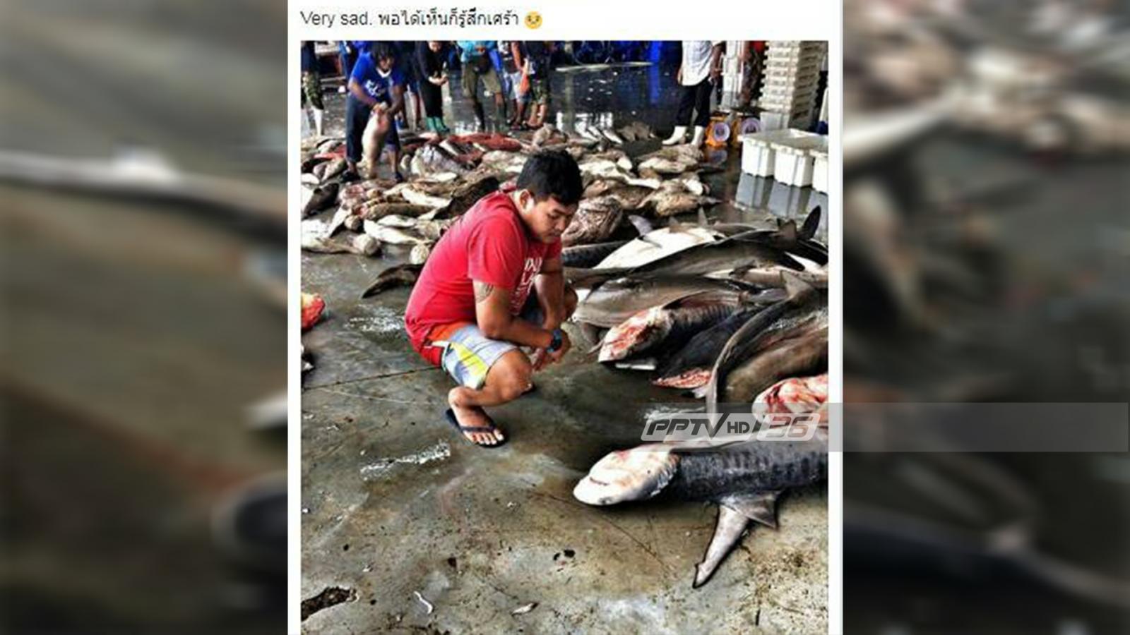 หนุ่มนักดำน้ำอึ้ง! พบฉลามหายาก 2 ชนิดในแพปลาที่ภูเก็ต