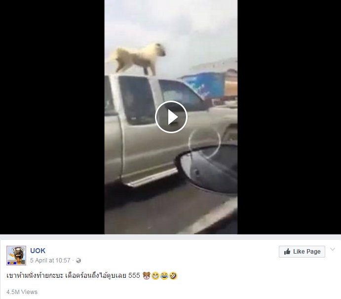 ชาวเน็ตแชร์! คลิปสุนัขรับลมบนหลังคารถ โยงคำสั่งห้ามนั่งกระบะ?