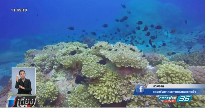 เปิดคลิปฝูงปลาปะการังเกาะโลซิน 8 มิ.ย.วันทะเลโลก