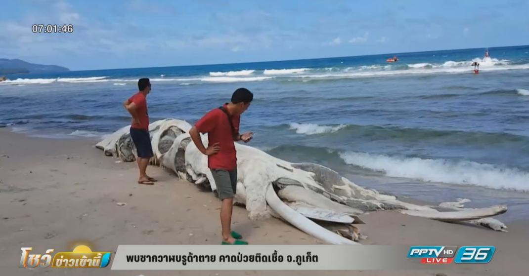 พบซากวาฬบรูด้าตาย คาดป่วยติดเชื้อ