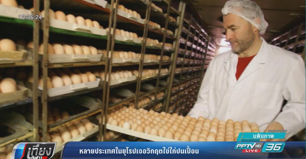 หลายประเทศในยุโรปเจอวิกฤตไข่ไก่ปนเปื้อนยาฆ่าแมลง