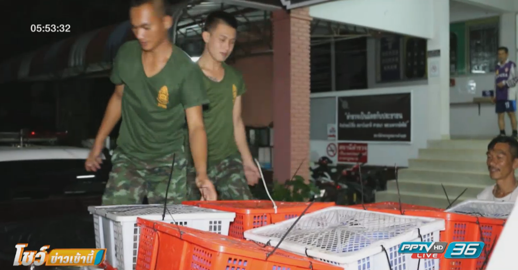 ตำรวจจับแก๊งขนตัวนิ่มมูลค่า 2 ล้านส่งประเทศจีน