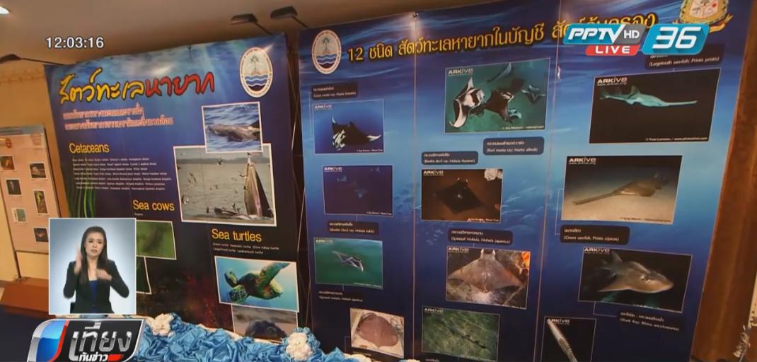 กรมทรัพยากรทางทะเลฯเผยสถานการณ์สัตว์ทะเลหายากตายมากสุดจากเครื่องมือประมง