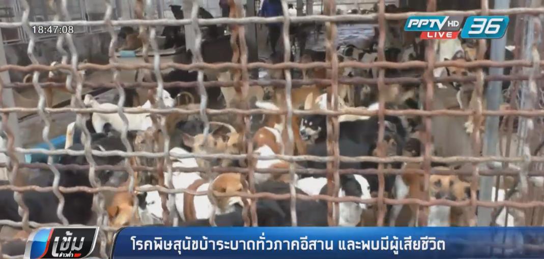 โรคพิษสุนัขบ้าระบาดทั่วภาคอีสาน และพบมีผู้เสียชีวิต