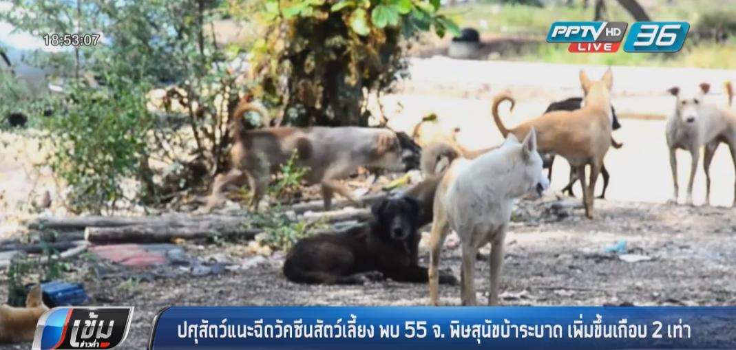 ปศุสัตว์แนะฉีดวัคซีนสัตว์เลี้ยง พบ 55 จังหวัดมีพิษสุนัขบ้าระบาดเพิ่มขึ้นเกือบ 2 เท่า