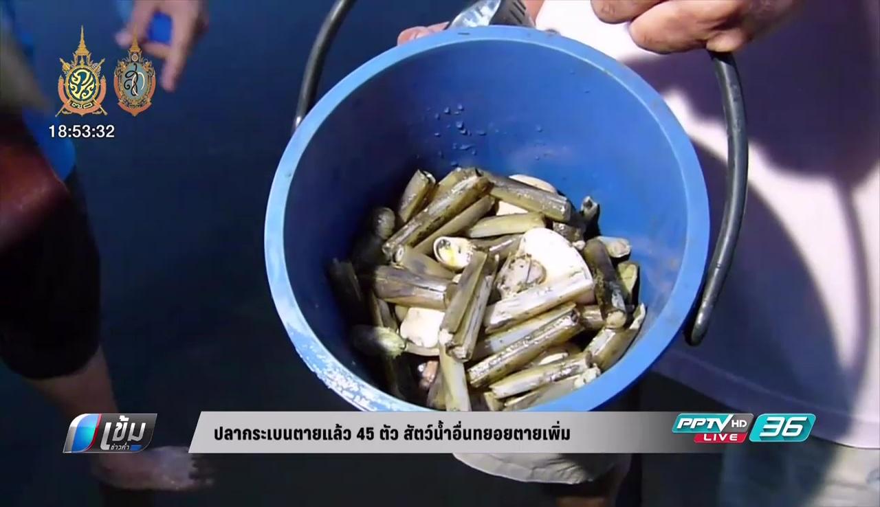 ปลากระเบนตายแล้ว 45 ตัว สัตว์น้ำอื่นทยอยตายเพิ่ม