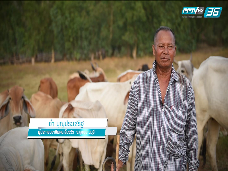 ภัยแล้ง / คนเลี้ยงวัว