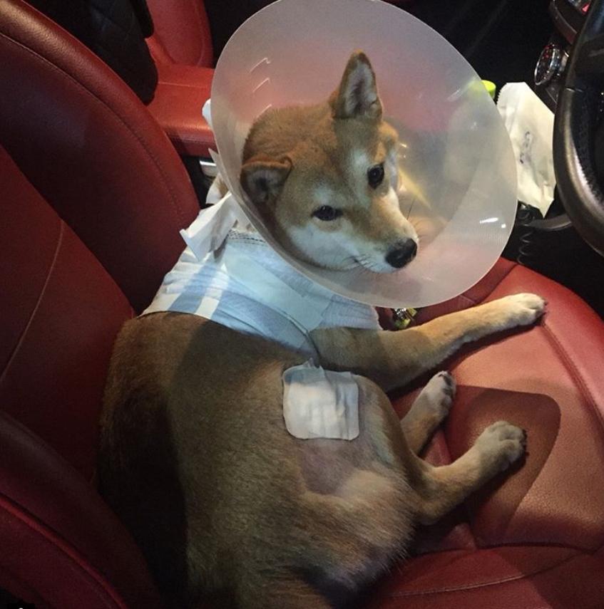 """""""กันต์ กันตถาวร """" ขึ้นโรงพักลงบันทึกประจำวันหลังสุนัขถูก """"พิทบูล"""" กัด"""