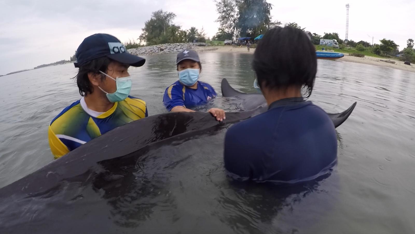 """สุดยื้อ!! """"วาฬนำร่อง"""" ตายแล้ว พบขยะพลาสติก 85 ชิ้นอุดตันกระเพาะอาหาร"""