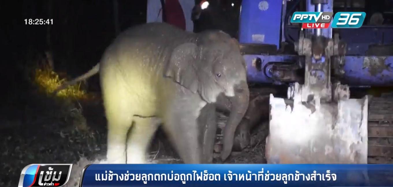แม่ช้างช่วยลูกตกบ่อถูกไฟช็อต เจ้าหน้าที่ช่วยลูกช้างสำเร็จ