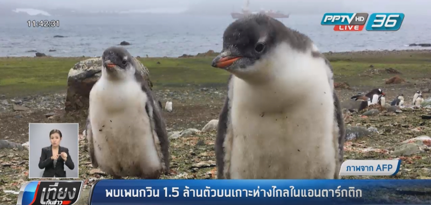 นักวิทย์ฯ พบเพนกวิน 1.5 ล้านตัวบนเกาะห่างไกลในแอนตาร์กติก