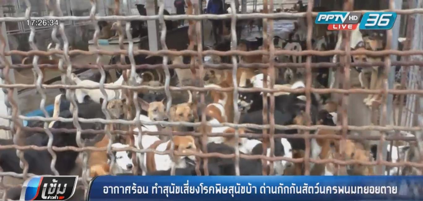 อากาศร้อนทำสุนัขเสี่ยงโรคพิษสุนัขบ้า ด่านกักกันสัตว์นครพนมทยอยตาย