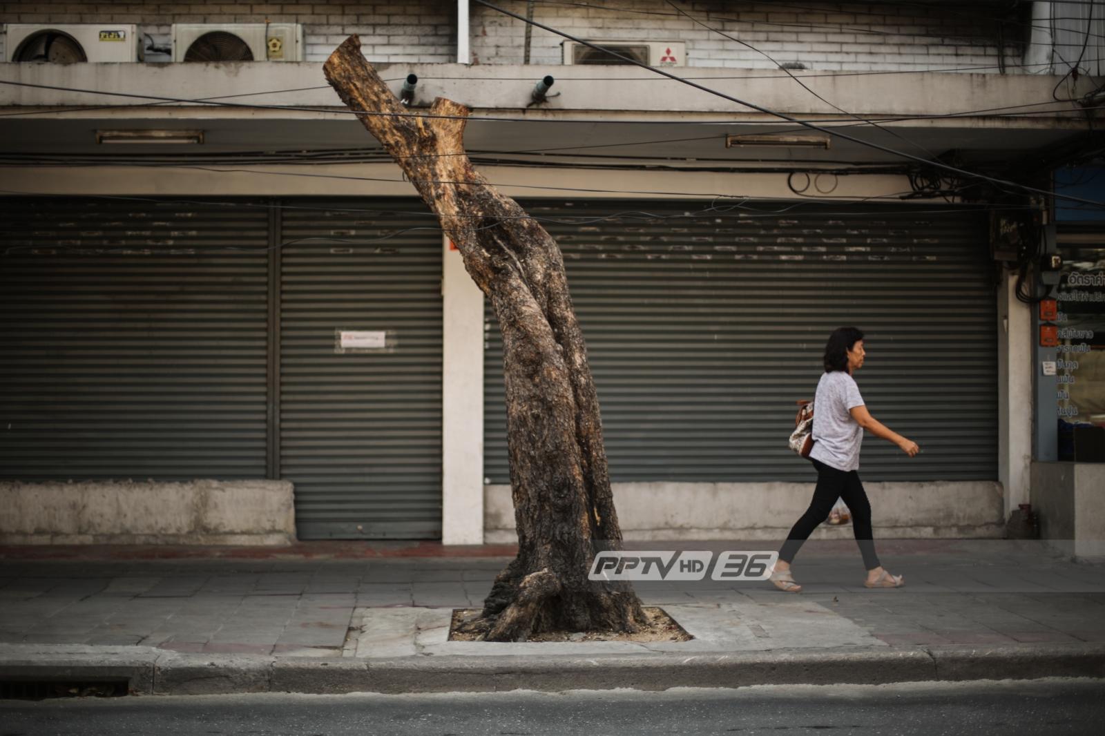 ผอ.เขตจตุจักรสั่งปรับ บ.อิตาเลียนไทยฯ 170,000 บาทตัดต้นไม้พลการ