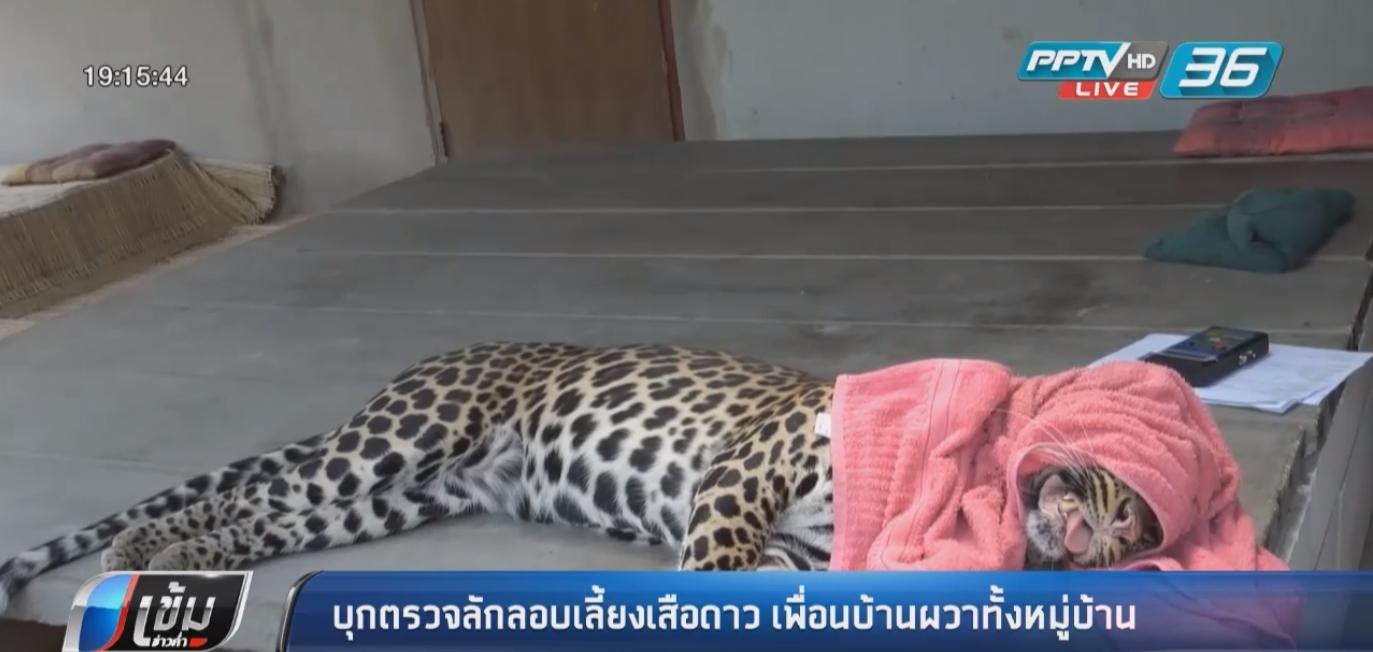 บุกตรวจลักลอบเลี้ยงเสือดาว พาเดินเล่นเพื่อนบ้านผวาทั้งหมู่บ้าน