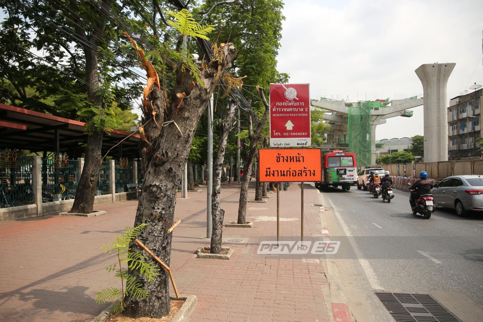 """เสียงเรียกจาก """"ต้นไม้ในเมือง"""" ผู้ประสบภัยเขตก่อสร้างรถไฟฟ้า"""