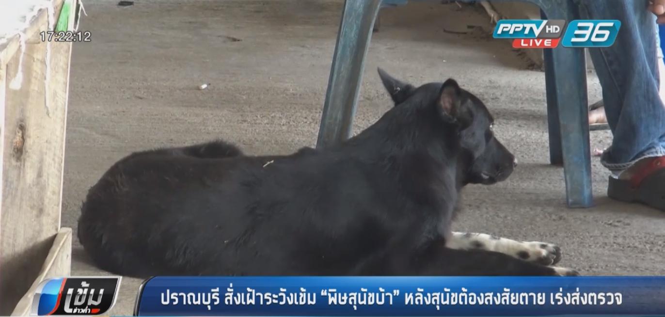 """ปราณบุรี สั่งเฝ้าระวังเข้ม """"พิษสุนัขบ้า"""" หลังสุนัขต้องสงสัยตาย เร่งส่งตรวจ"""