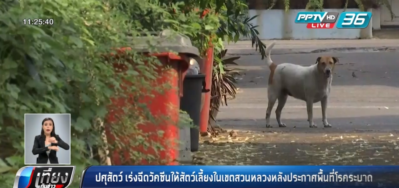 ปศุสัตว์ เร่งฉีดวัคซีนให้สัตว์เลี้ยงในเขตสวนหลวงหลังประกาศพื้นที่โรคระบาด