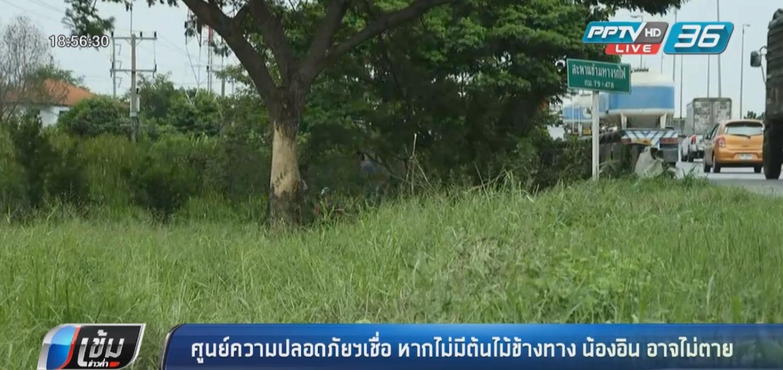 """ศูนย์ความปลอดภัยฯเชื่อ หากไม่มีต้นไม้ข้างทาง """"น้องอิน"""" อาจไม่เสียชีวิต"""